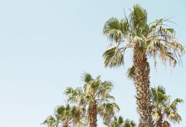 blog-palmtrees-2020
