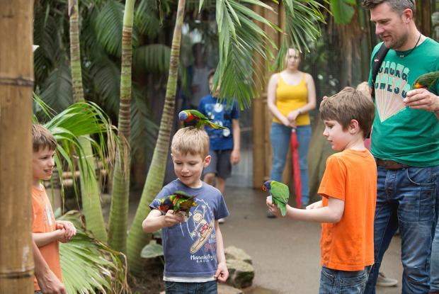 Kinderen aaien Lori's in de zoo